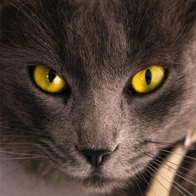 Día Internacional del Gato - Mercado de los Gathijos